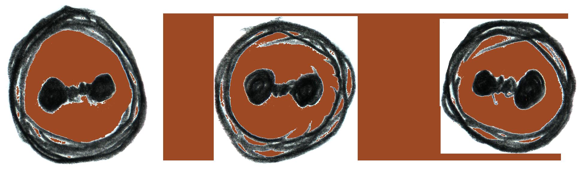 logo 3butoni